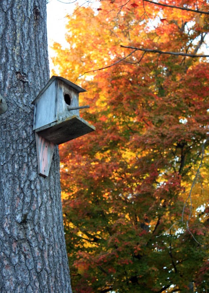 Autumn Bird House